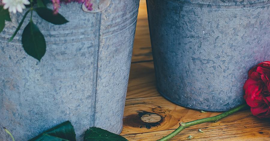 Ako na pestovanie čučoriedok vnádobách