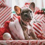 Pozeráte vianočné darčeky v predstihu? Ponúkame vám dobré tipy na vianočné darčeky pre dospelých